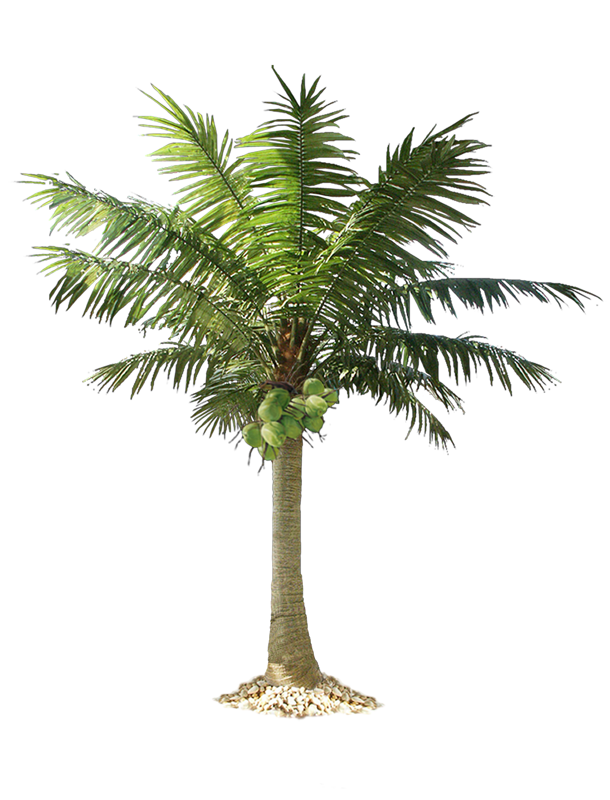 Free Download Palm Tree Png Images image #31891