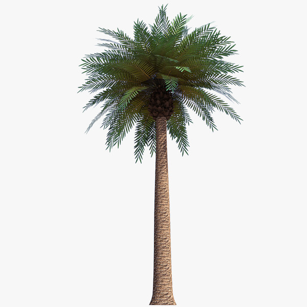Hd Palm Tree Image In Our System