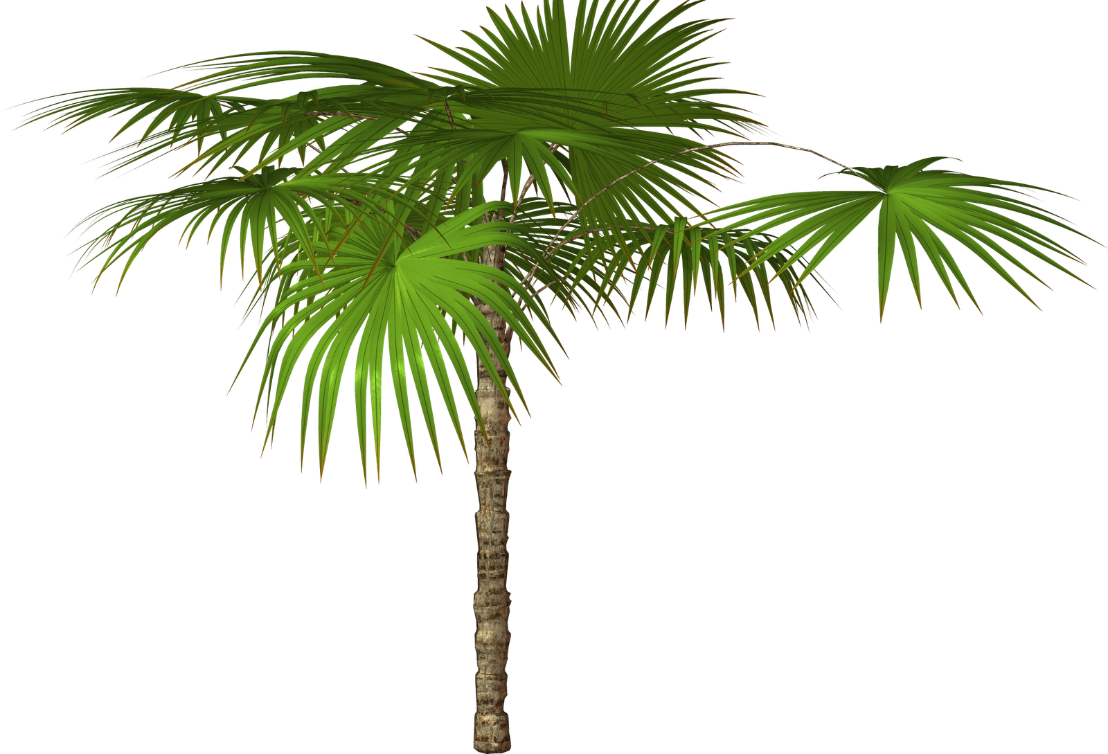 Palm Tree Transparent Background Png image #31897