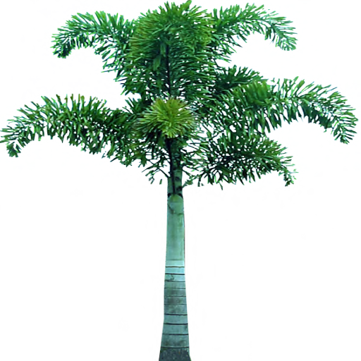 Palm Tree In Png image #31899