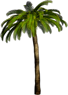 High Resolution Palm Tree Png Clipart image #31900