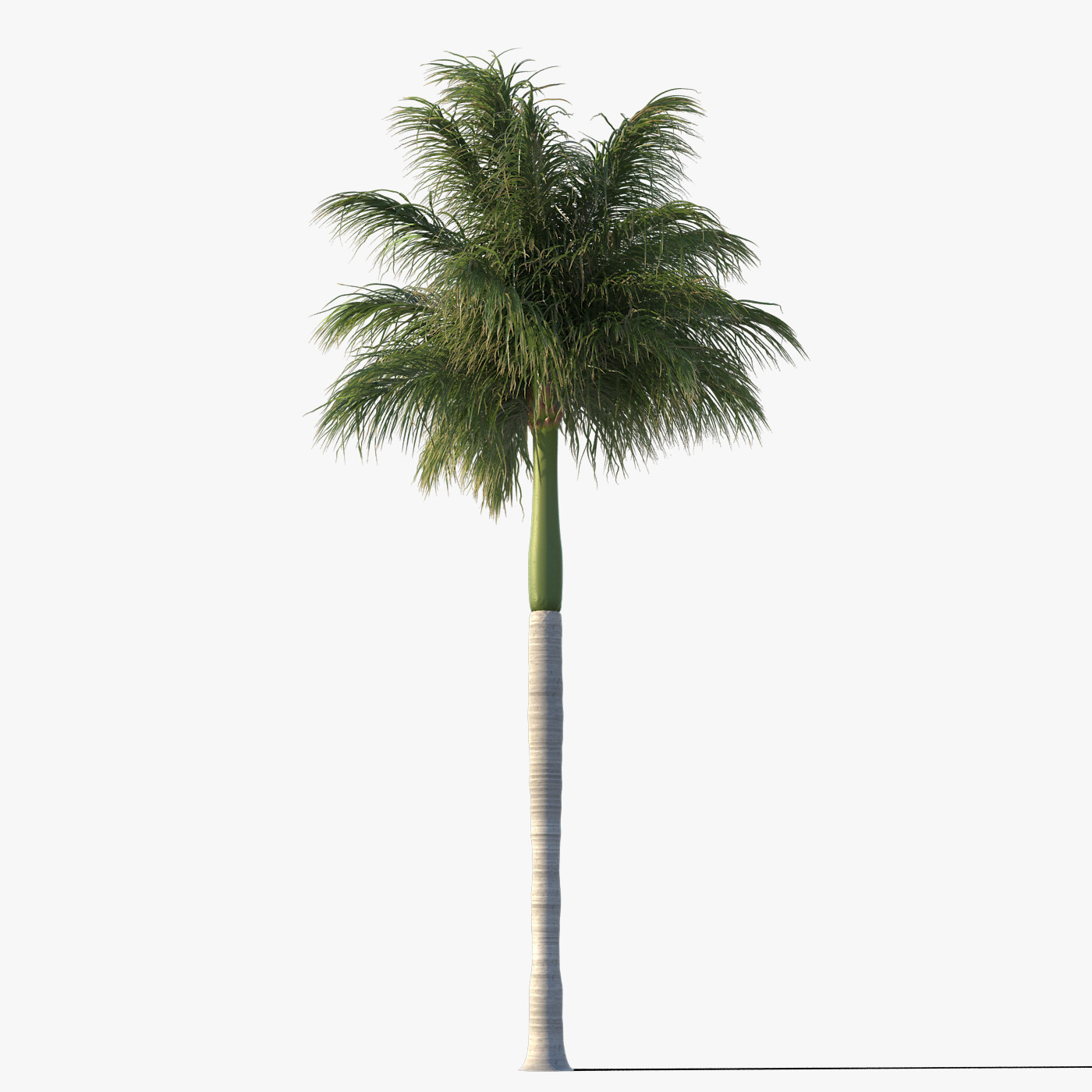 Use These Palm Tree Vector Clipart image #31902