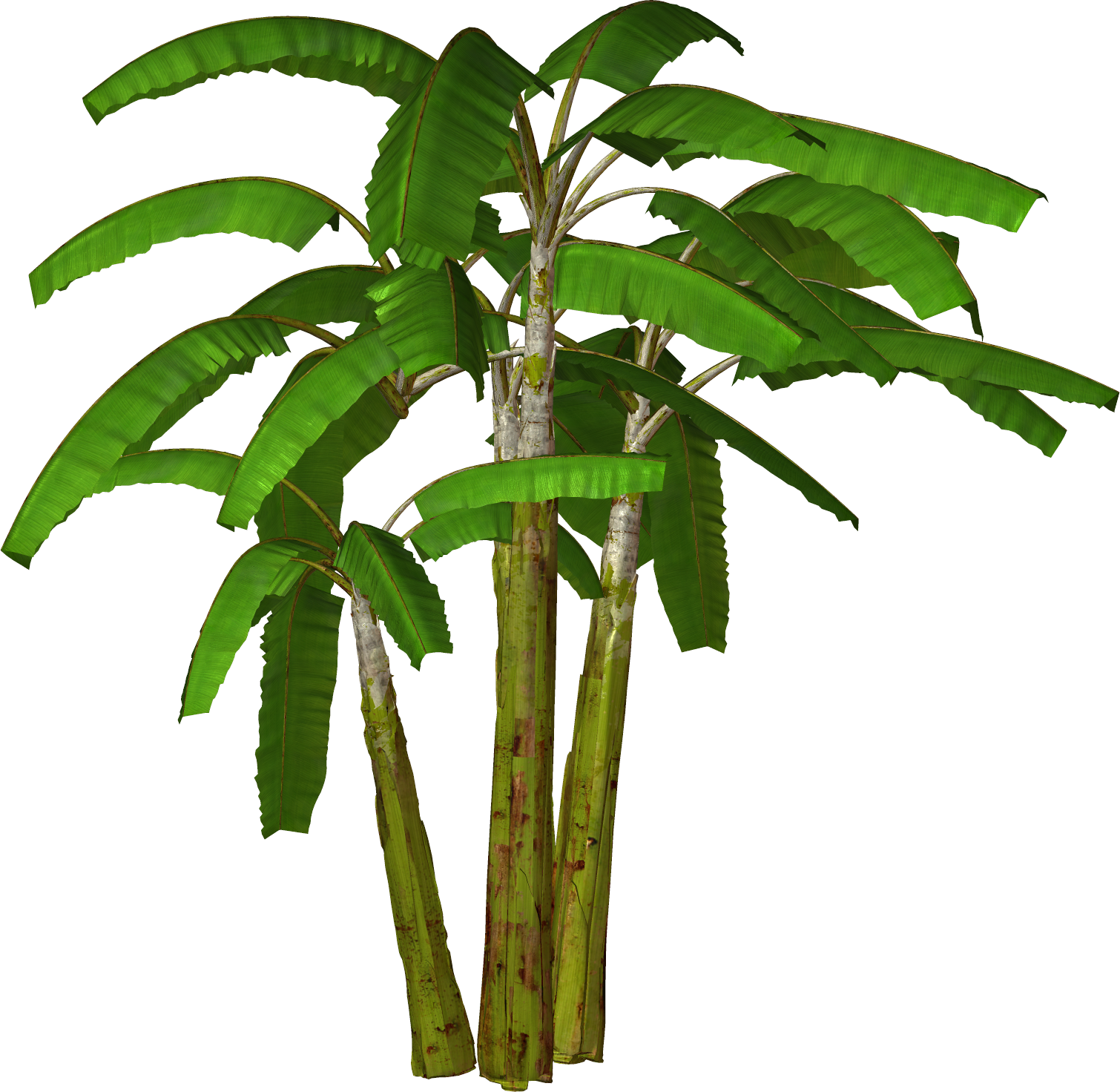 Palm Tree Transparent Background image #31905