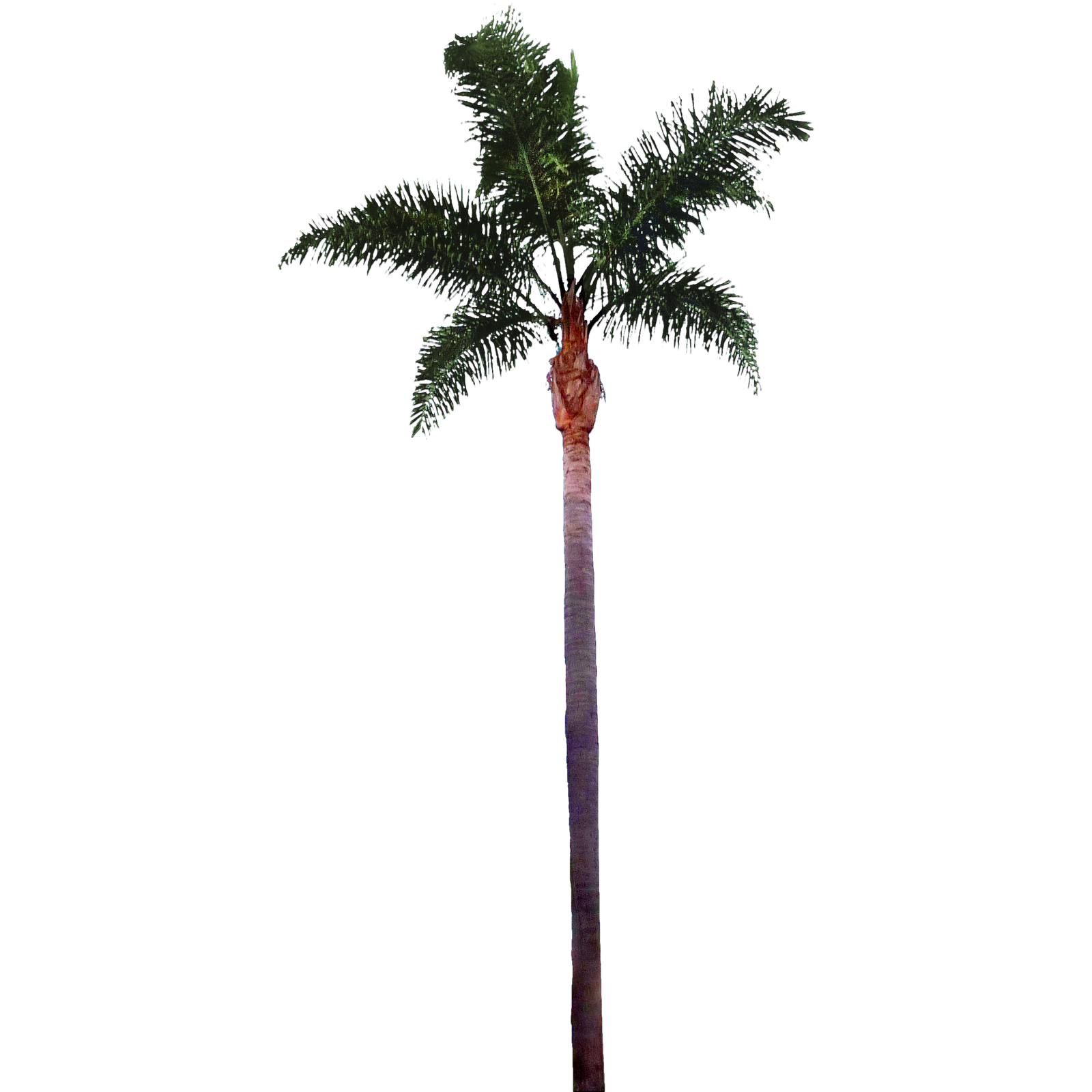 Palm Tree Images Best Clipart Free