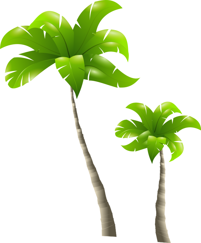 palm tree png clipart