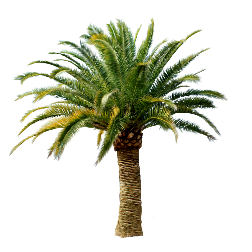 Palm Tree Png Photo image #31879