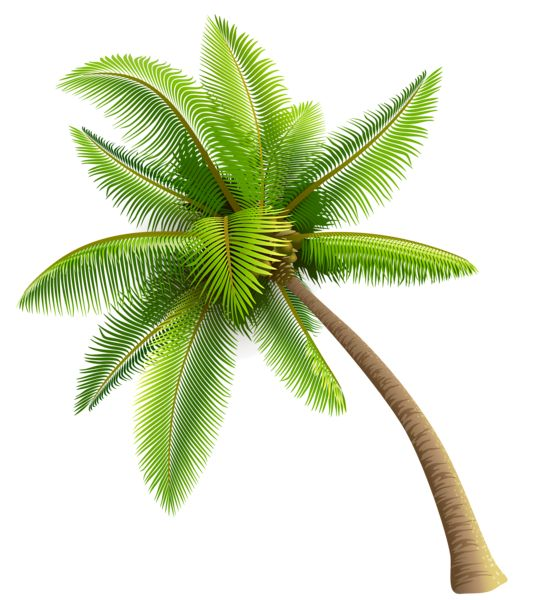 palm tree png pic