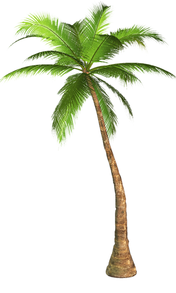 Palm tree transparent background image