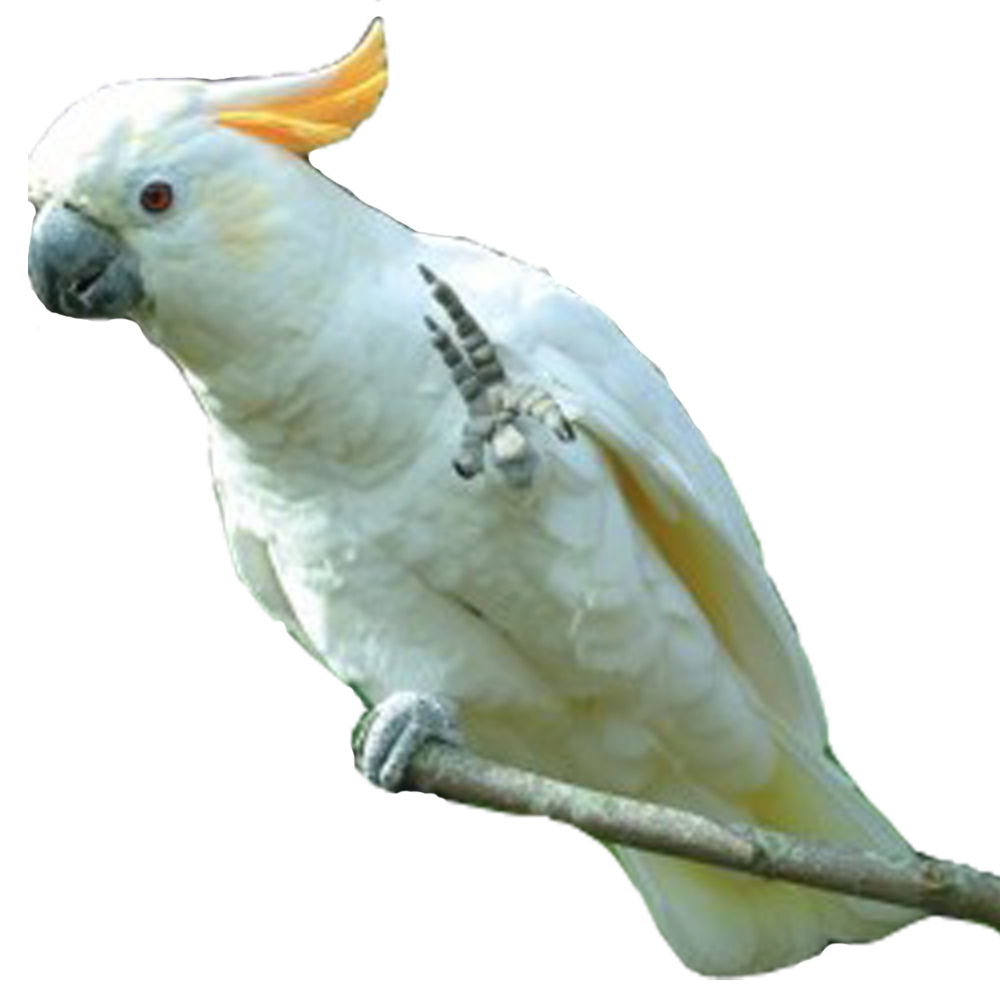 PNG Parrot Photo image #22817