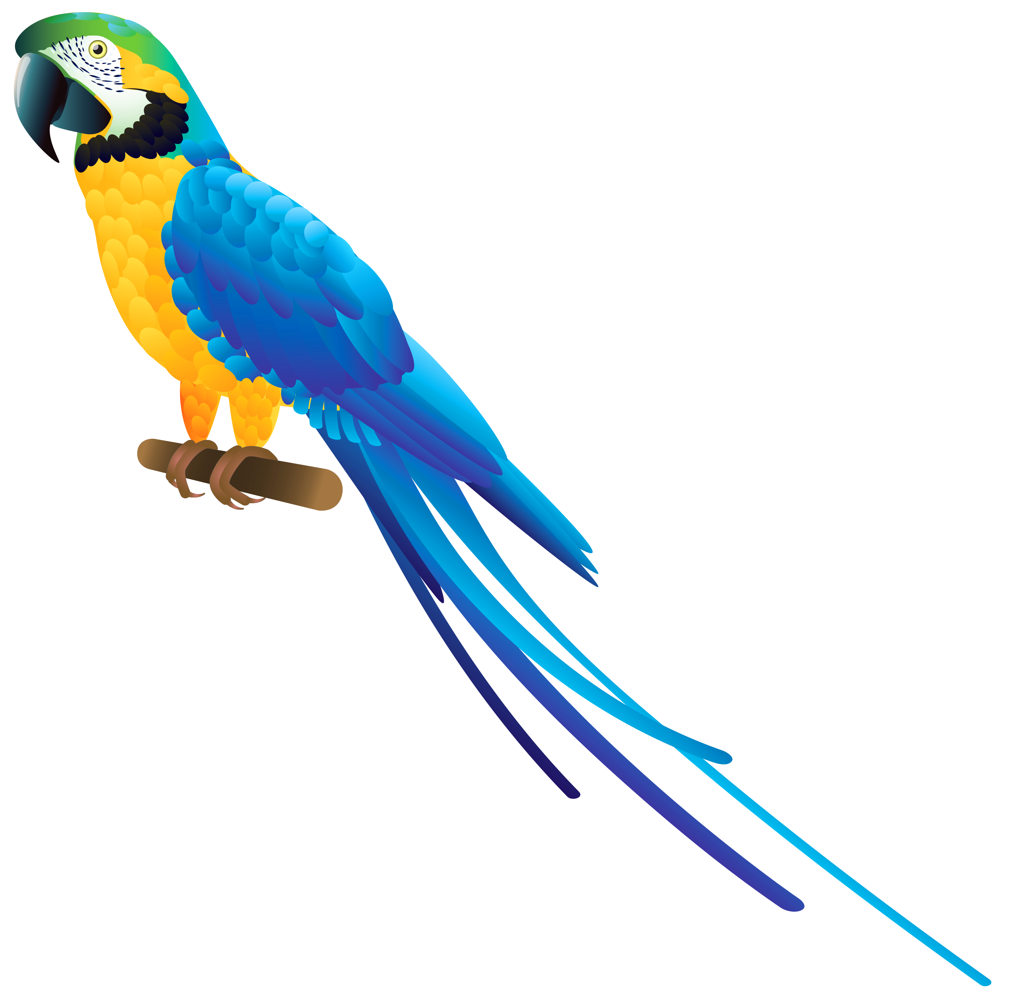 Png Clipart Collection Parrot image #22824
