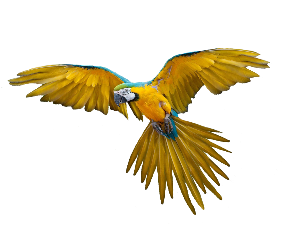 Parrot Png Available In Different Size image #22808