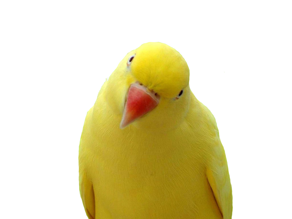 Parrot PNG File