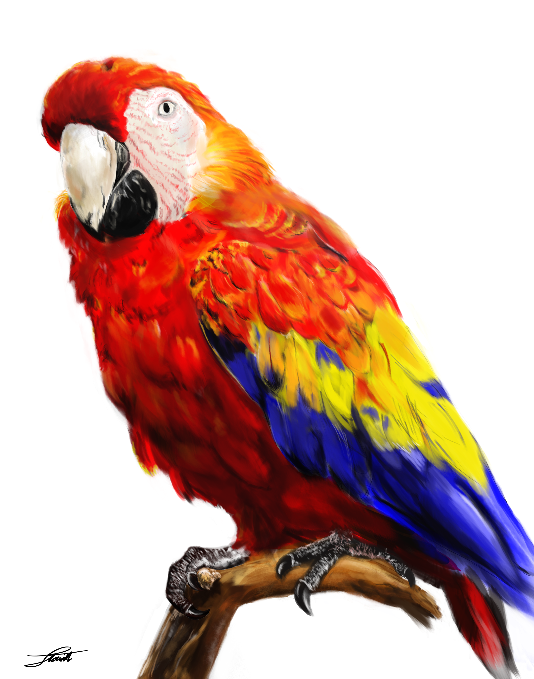 Free Icon Vectors Parrot Download image #22837