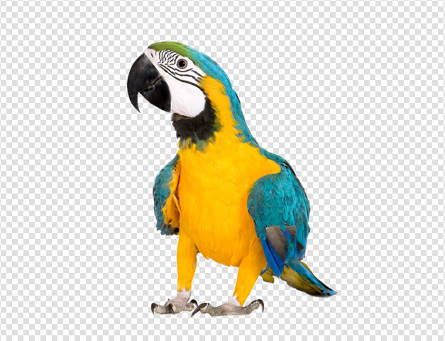 Hd Parrot Image In Our System image #22811
