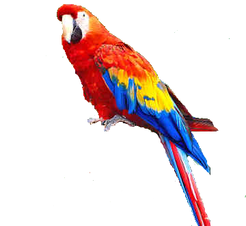 Download And Use Parrot Png Clipart image #22814