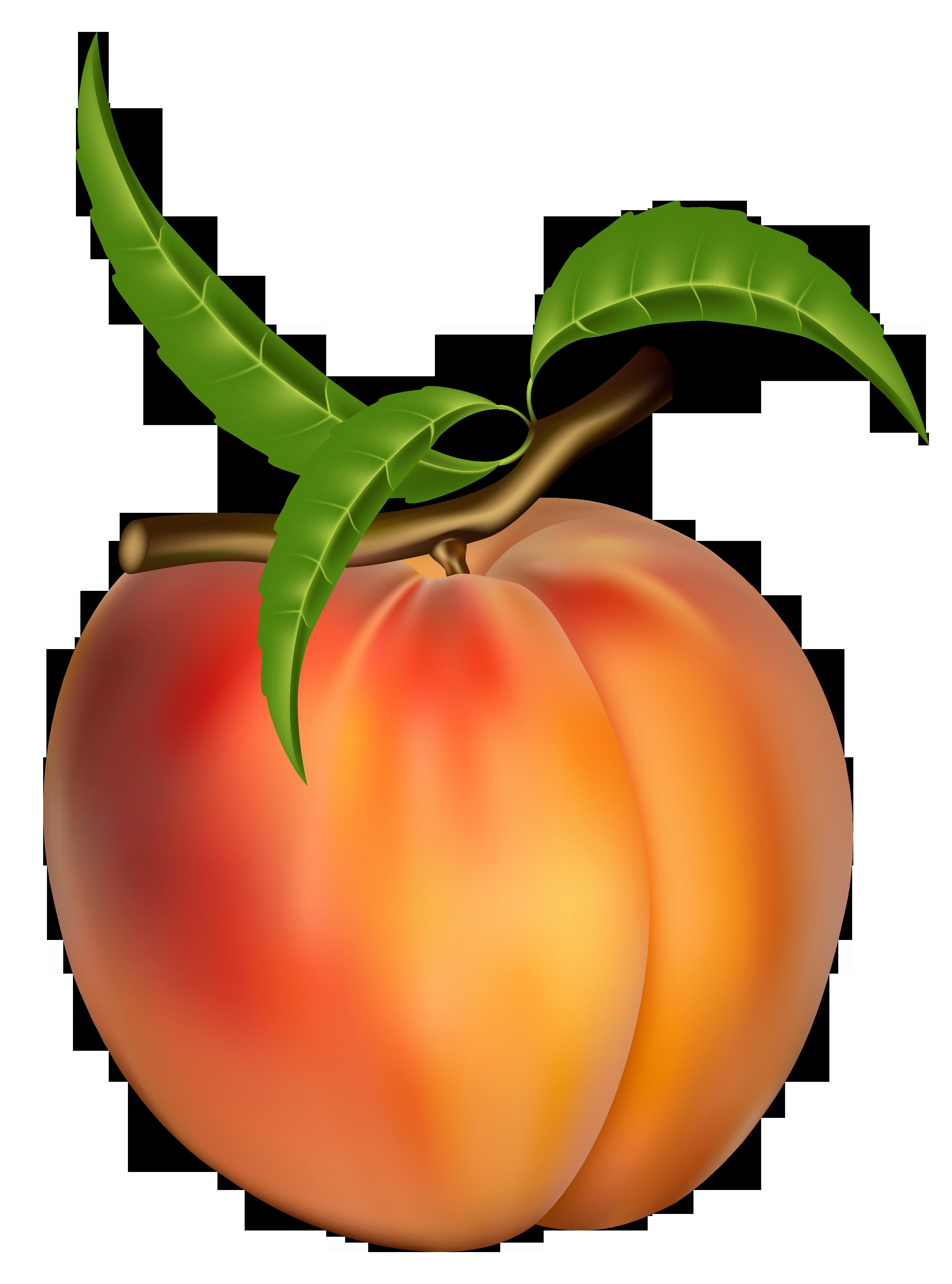 Peach Clip Art images