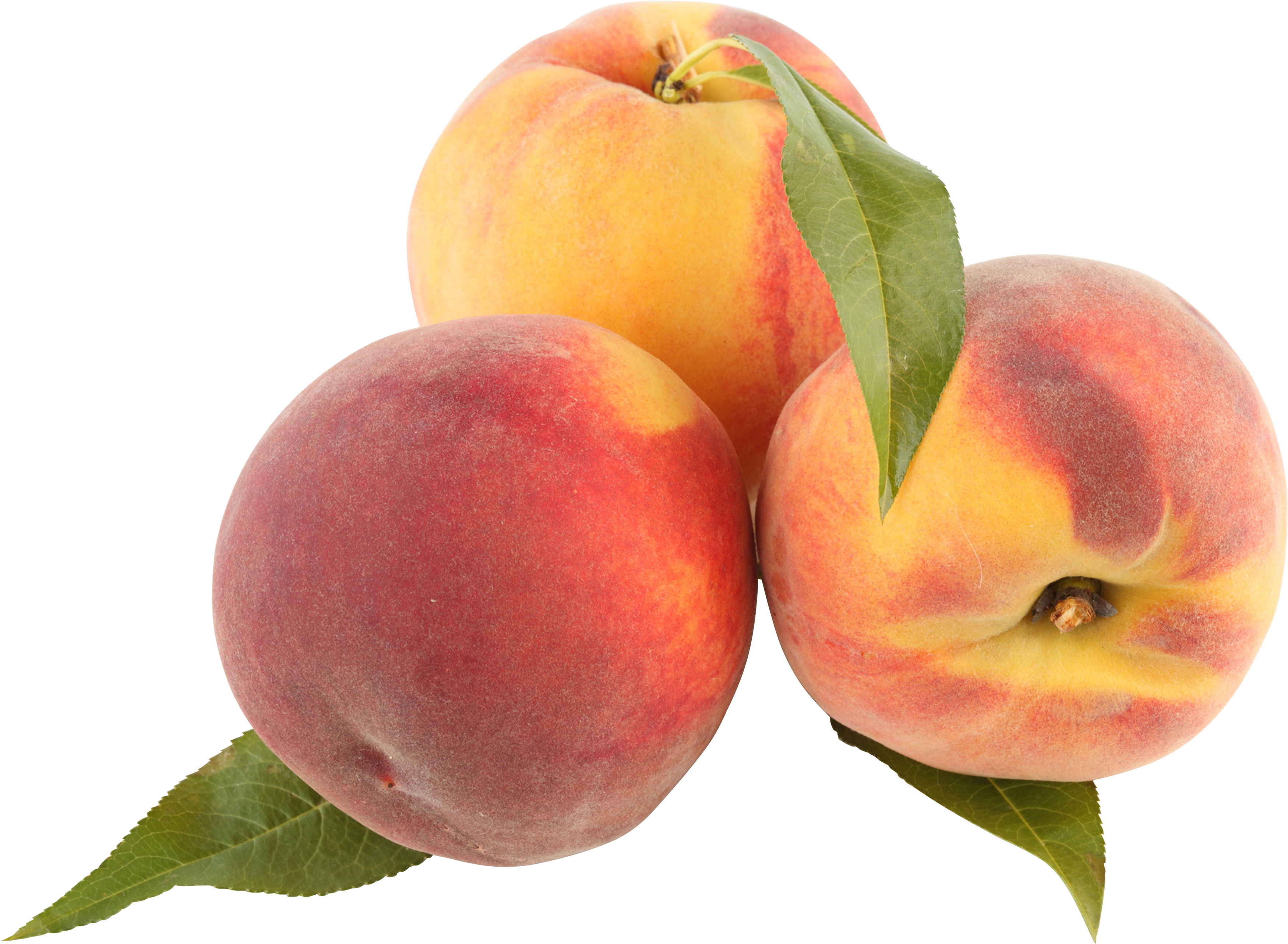 Clipart PNG Peaches