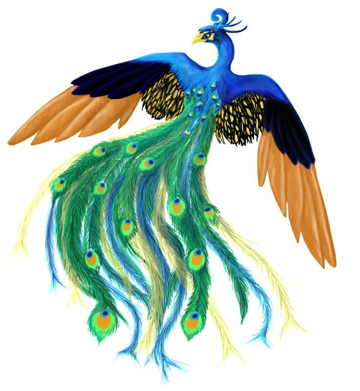 High Resolution Peacock Png Icon image #22879