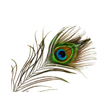 Transparent Peacock PNG image #22889