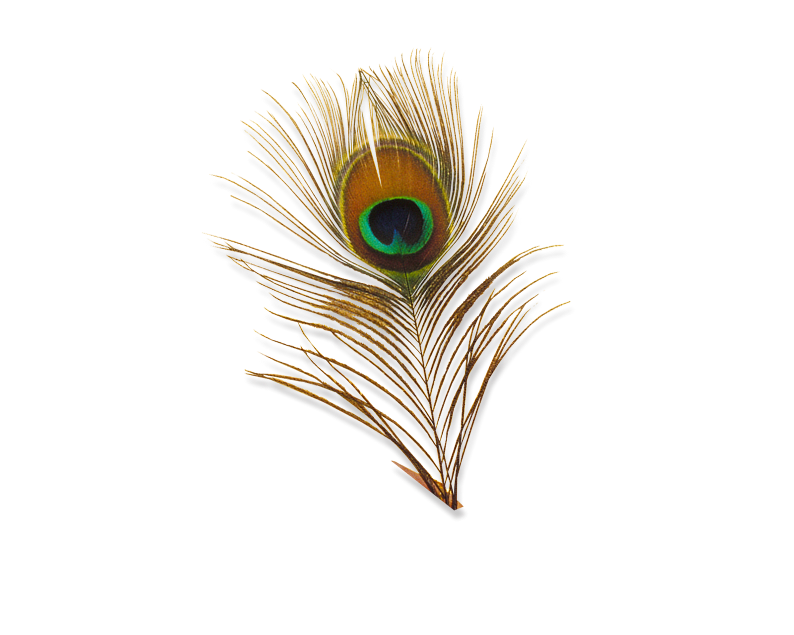 Peacock PNG Transparent Image image #22895