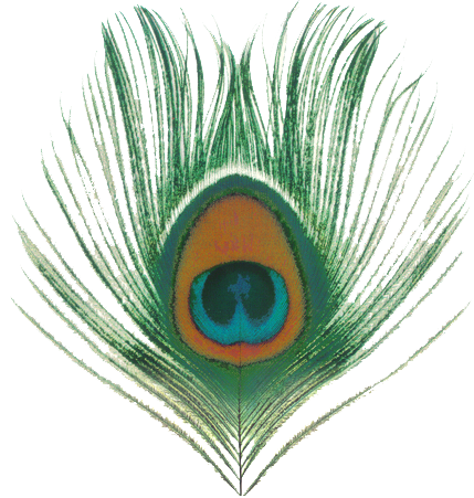 Use These Peacock Vector Clipart image #22903