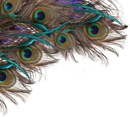 Background Peacock Hd Transparent Png image #22908