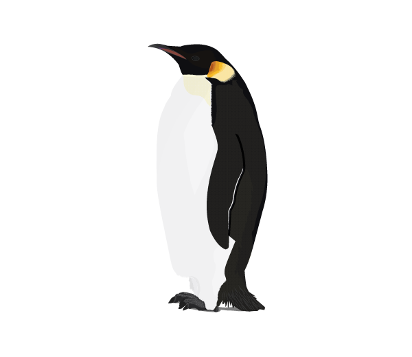 Penguin Png Available In Different Size image #19546