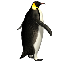 Penguin Png Image Best Collections image #19539