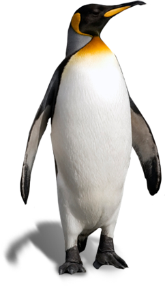 Pictures Free Penguin Clipart image #19543