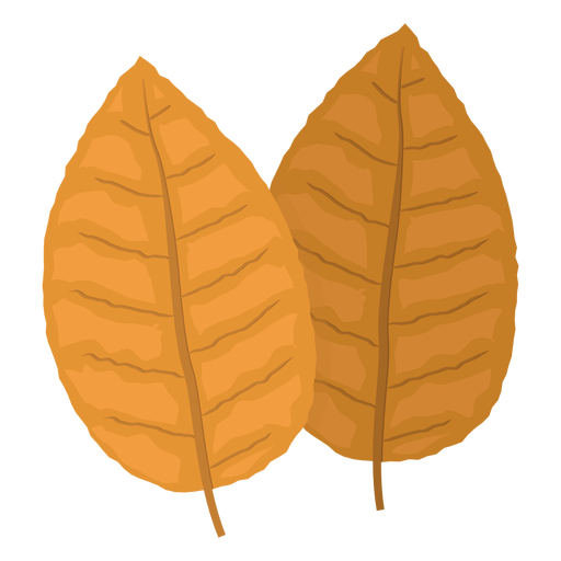 Photo Of Tobacco Leaves Clipart image #48062