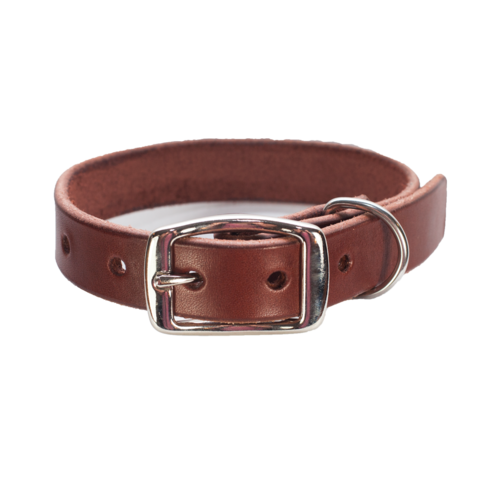 Photos and metal dog collar Belt dark brown