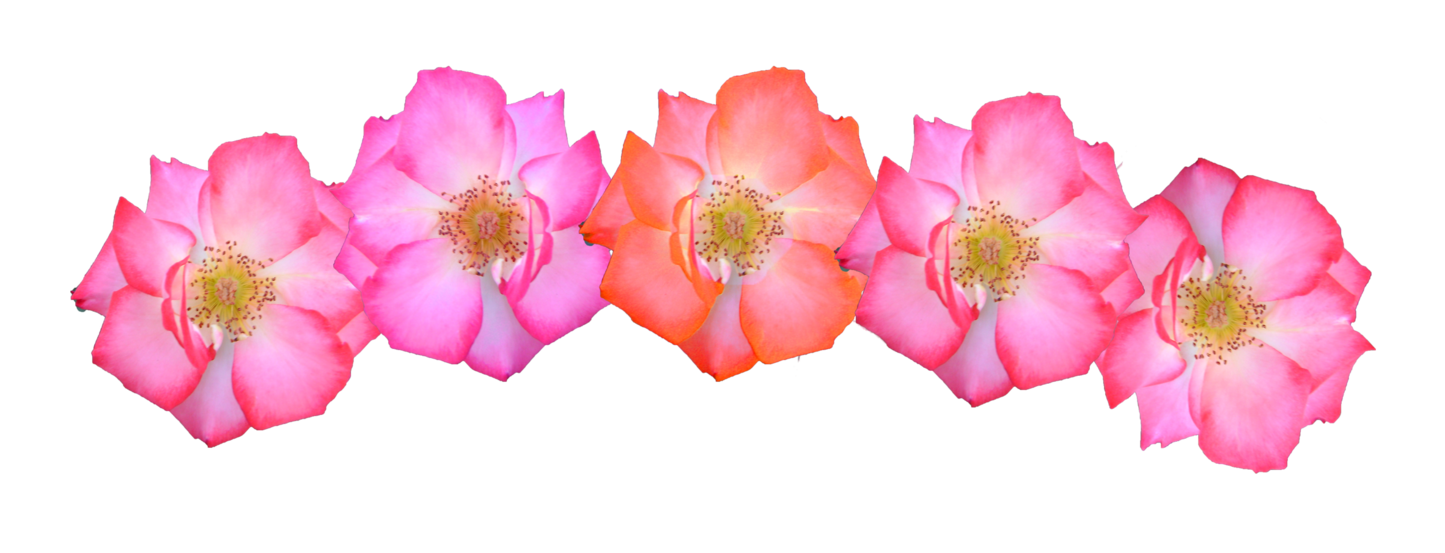 Pink Flowers Crown Png image #42582