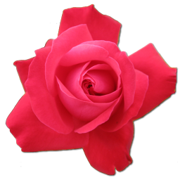 Pink Roses Icon image #13901