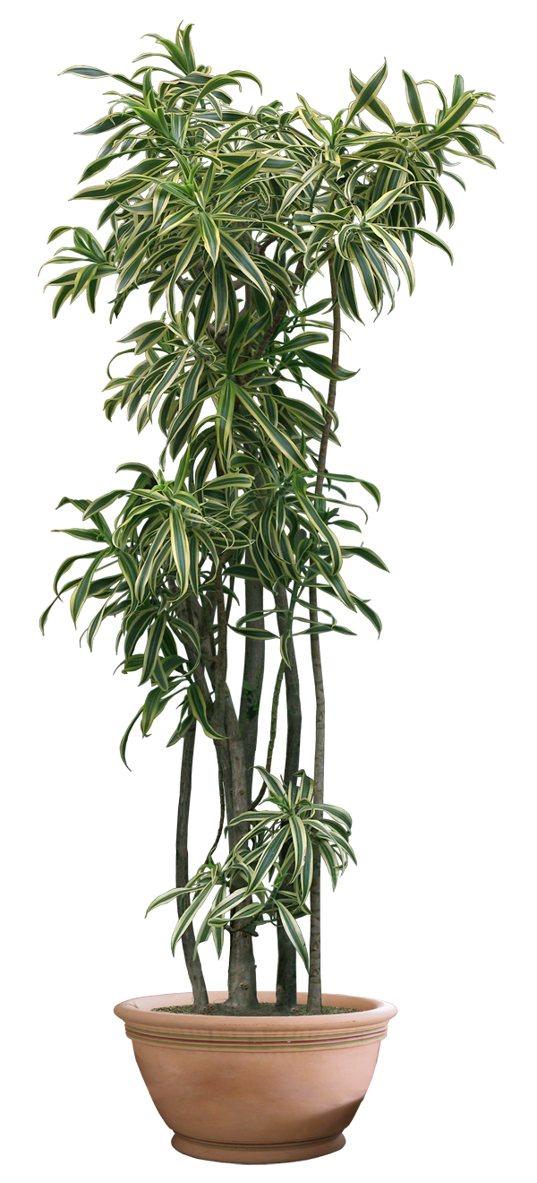 Plant Png Clipart image #44928