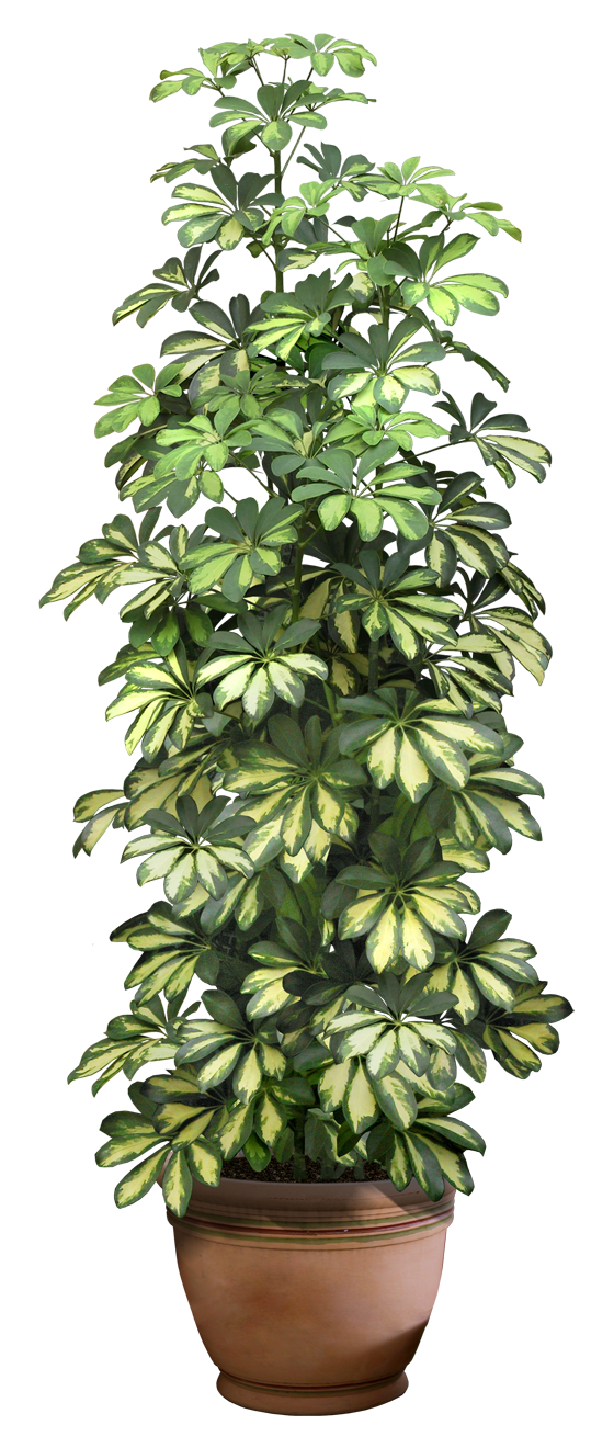 Plant Png Photos image #44908