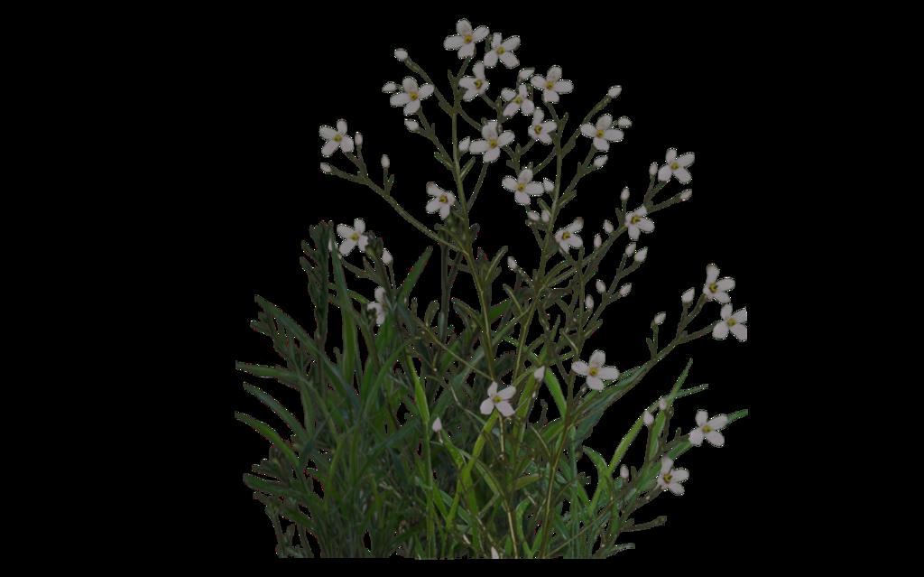 plant png transparent