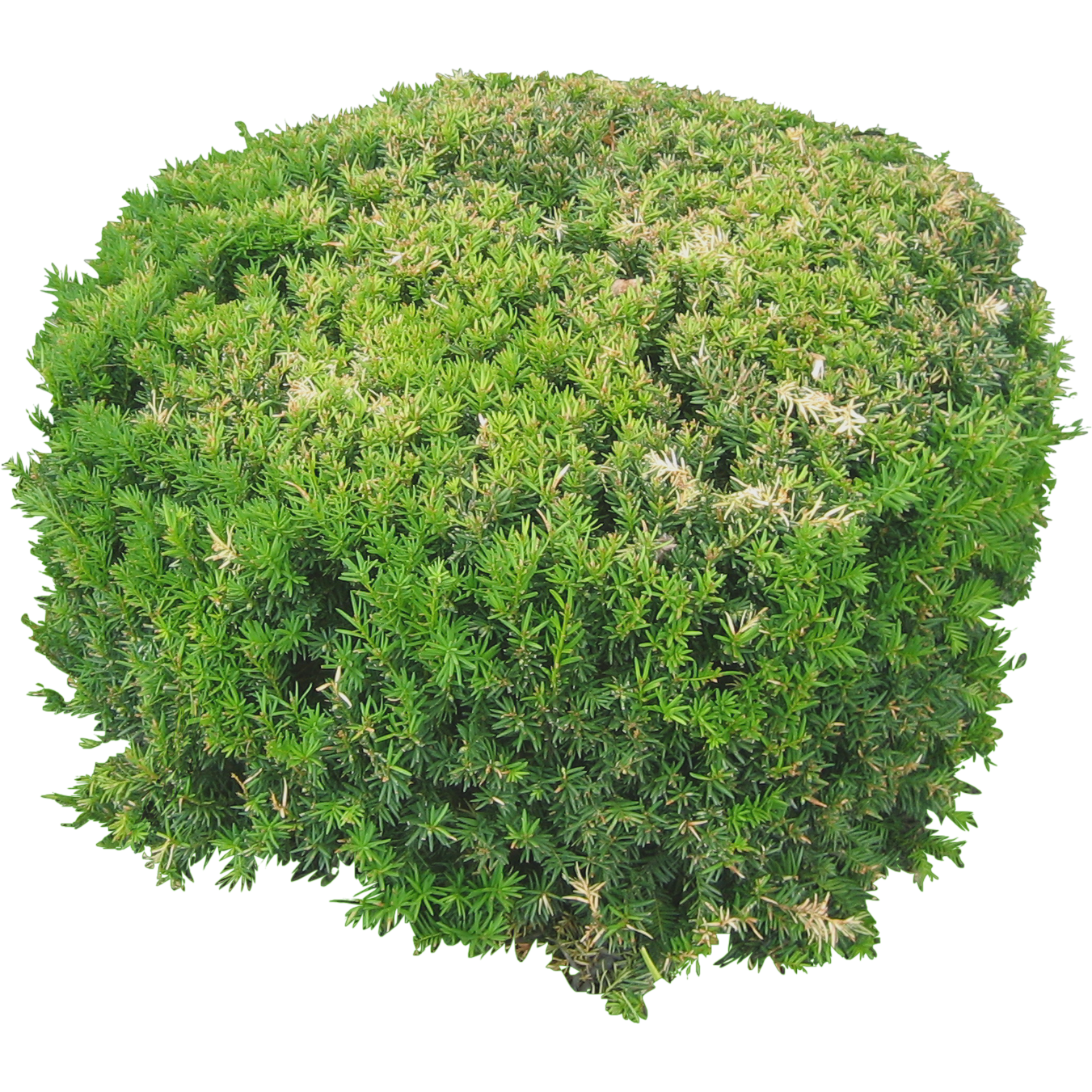 plants flowers png image top view