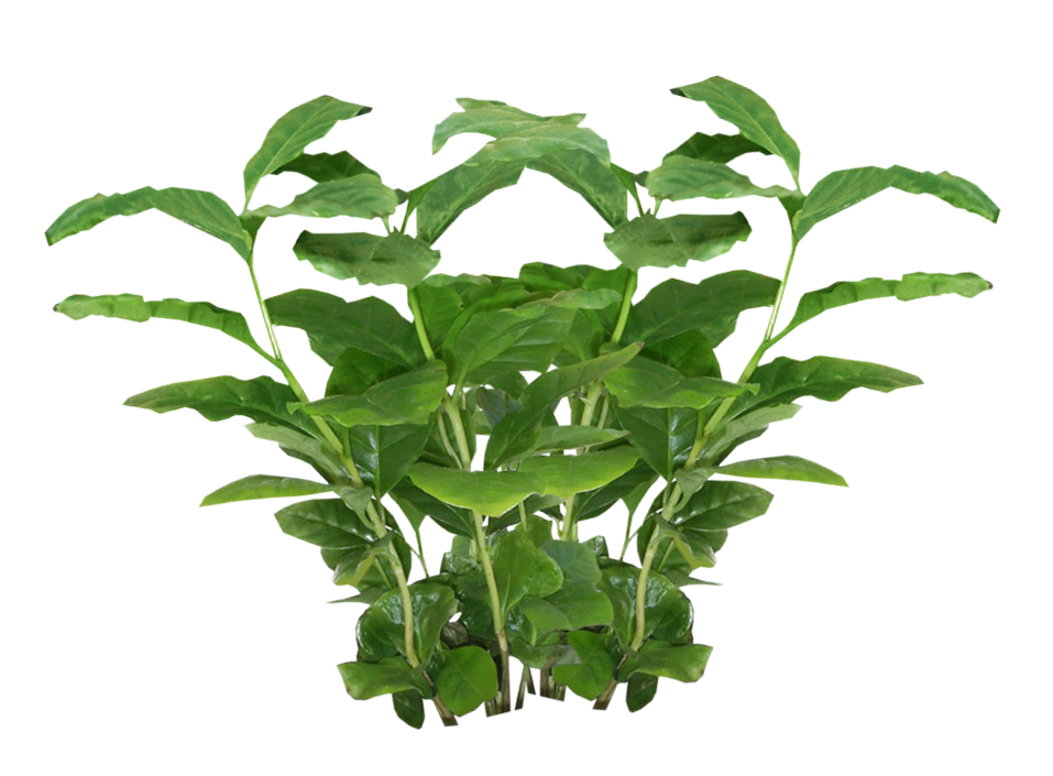 Plants Png Picture image #44905