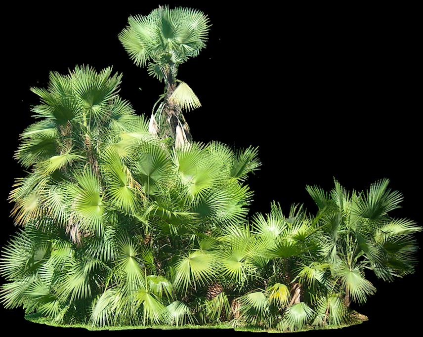 142 Best Plants Png - Duper