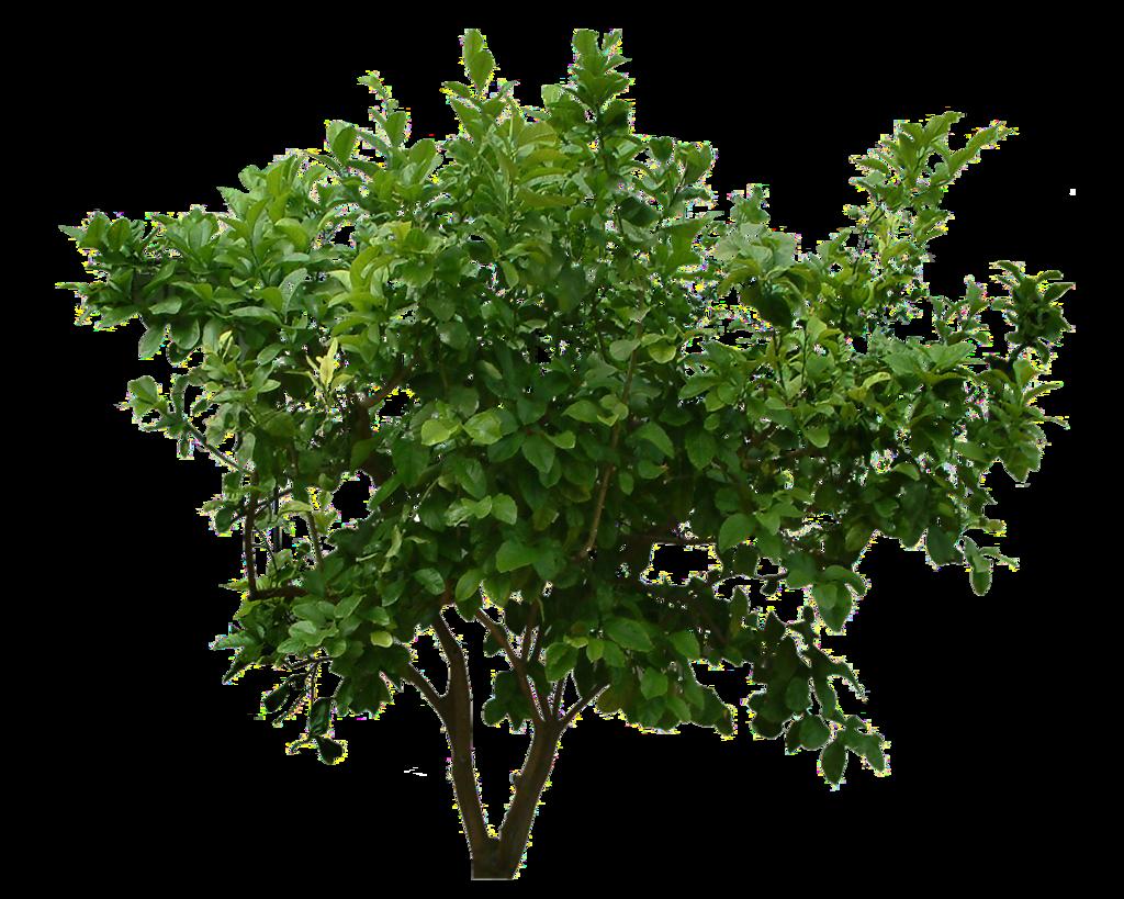 plants png transparent images
