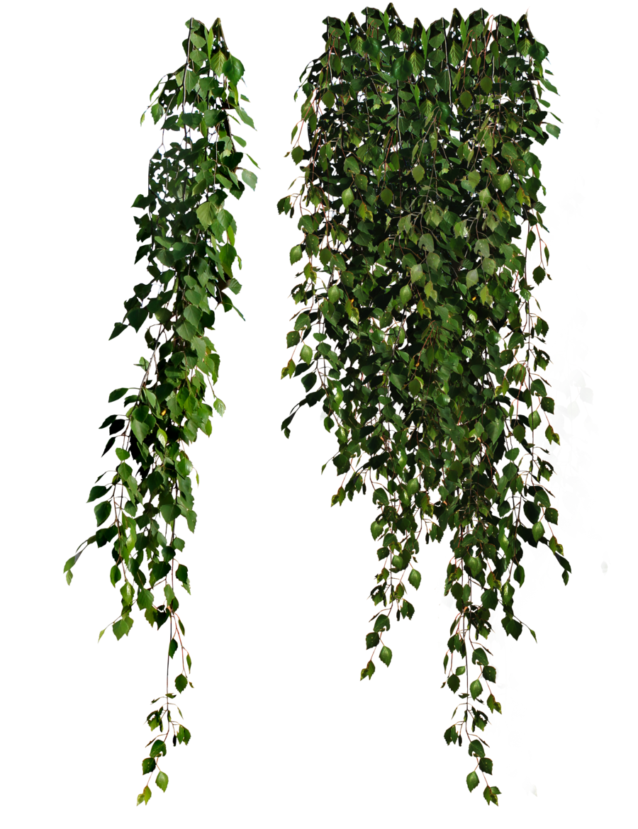 Plants Png Transparent Images image #44915
