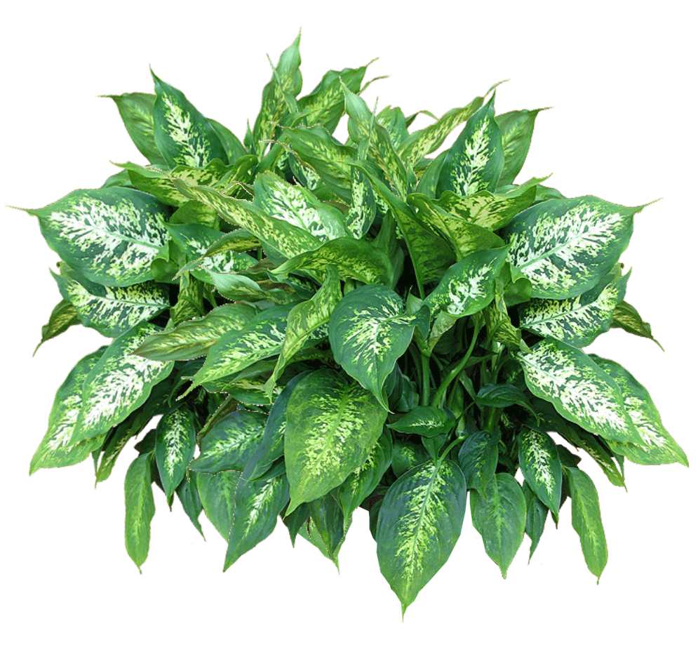 Plants Png Transparent Photo image #44903