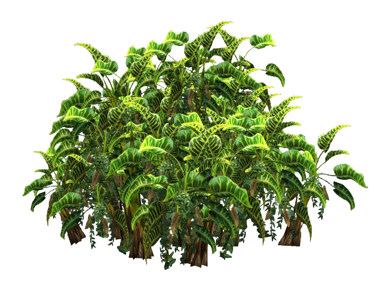 Plants Png Transparent Top View image #44921