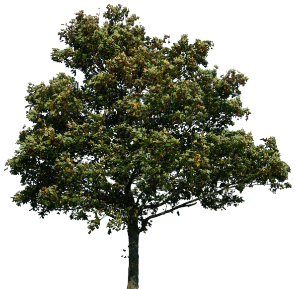 Png Tree Designs image #729