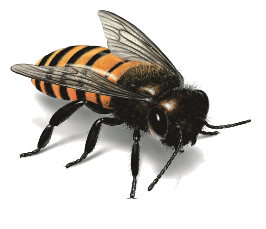 Png Format Images Of Bee image #45410
