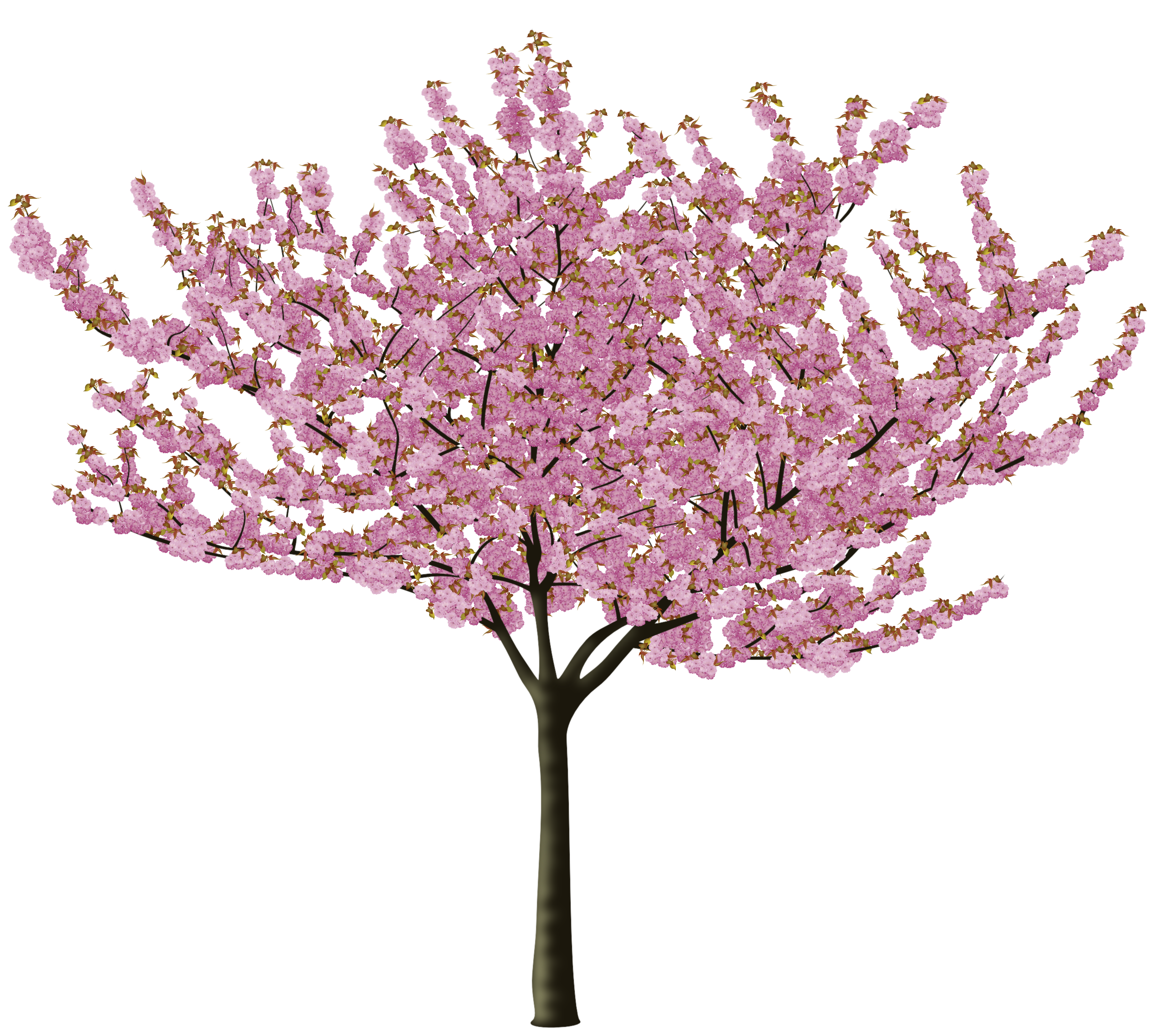 Png Format Images Of Cherry Blossom image #45488