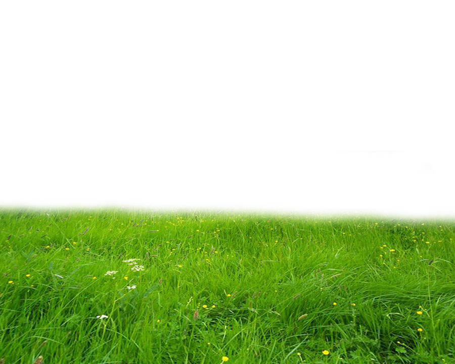 Png Grass image #4756
