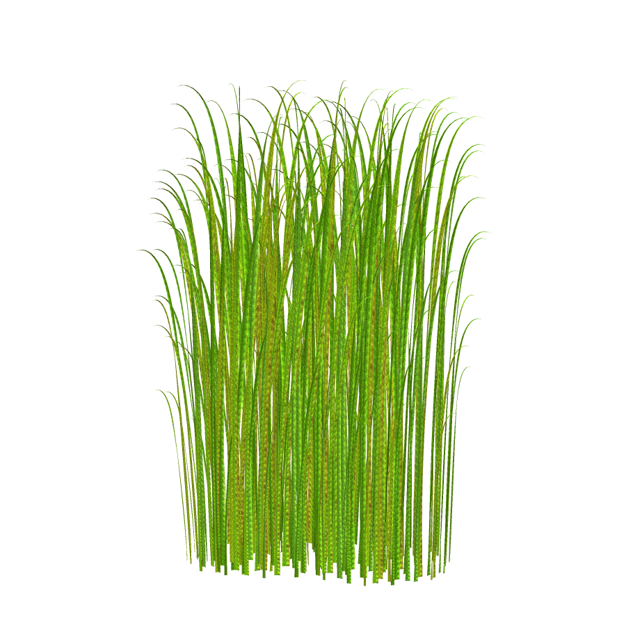 Png Grass Clipart Transparent Image image #44180