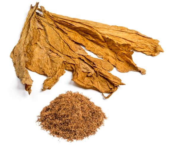 PNG Image Of Dried Tobacco image #48048