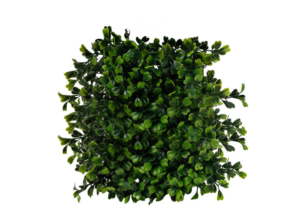 Short Flowering Bushes